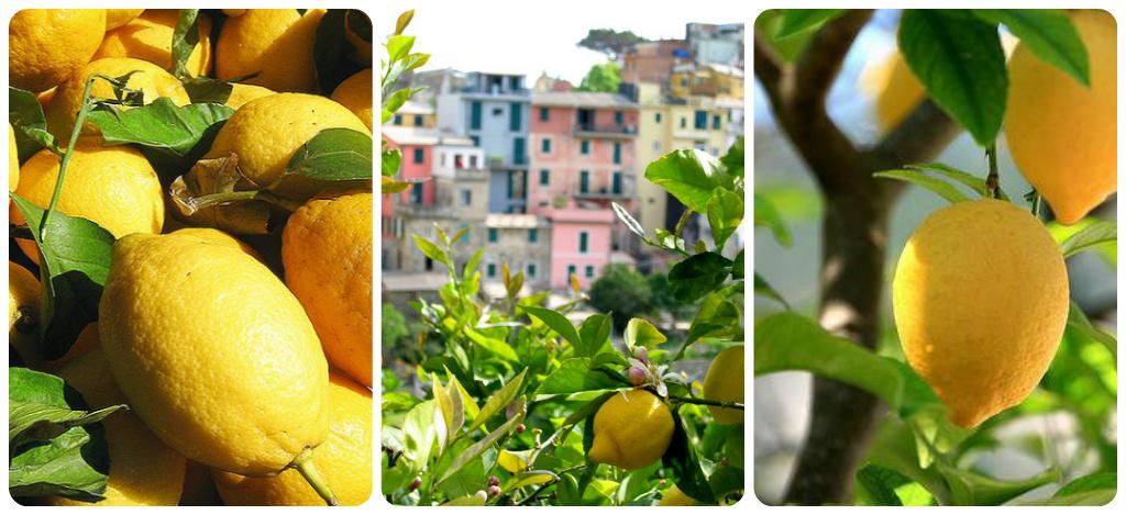 Zesty Lemon Granita | Bloke In A Kitchen